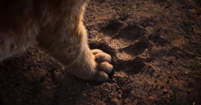 lion-king-trailer-04-ht-jc-181122_hpEmbed_25x13_992
